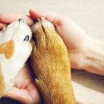 高齢の犬のケアと保険の備えに注目