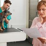 犬の保険の加入率と備えることの重要性