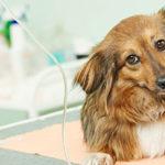 犬の保険の金額は意外と安いです